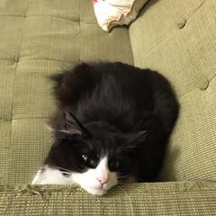 もんちゃん/保護猫/ニャンコ同好会 そんなとこにあご乗せてよく寝れるね☺️