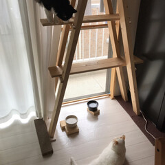 手作りエサ入れ/陶芸/手作りキャットタワー/かぎしっぽ/白猫/ハチワレ猫/... 狙いを定めて‥そのまま飛びつくかと思いき…