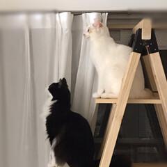 手作りキャットタワー/猫/かぎしっぽ/ハチワレ/白猫/保護猫/... 🐱来てあっという間に半年経ちました😌  …