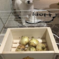 野菜ストッカー/いつもありがとう/木工作家じいや/リミ友 お野菜ストッカー🙌🙌 モニターです🧅🧅🧅…