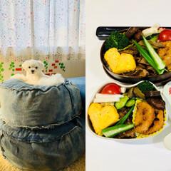 フード 今日のお弁当🍱 今朝の  そういちろう🐶…(1枚目)