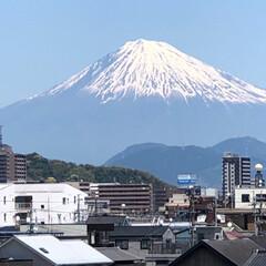 富士山/マルチーズ/お散歩 5月8日金曜日 そうちゃんとお散歩🚶♀…(2枚目)