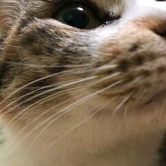 ペット/猫の日 我が家 1階の 母が 飼っています。 き…