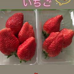 章姫いちご/いちご/冬 みずみずしい  美味しい いちご🍓🍓🍓 …(1枚目)