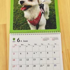 6月/カレンダー/ペット おはようございます☀️☀️ 今日から 6…