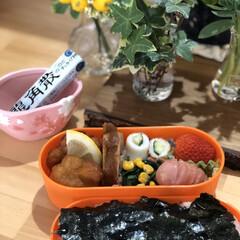 たんぽぽ/街路樹のハナミズキ/マルチーズ/お昼ごはんお弁当/お散歩 今日は海苔弁だよー〜チョコポン💕さん😆 …