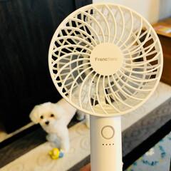 LOVE  Chloe'/フランフラン フランフランで購入した   小さな扇風機…