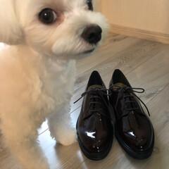 そういちろう/わし/靴/マルチーズ/ペット/ファッション おはようございます 台風🌀💨 被害が出ま…(4枚目)