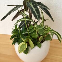 キッチンカウンター/グリーン/インテリア お花屋さんに行ったら、かわいい グリーン…