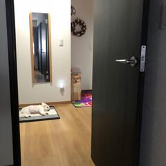 廊下/ペット/犬/住まい 朝  家族を 見送って から 廊下で 二…