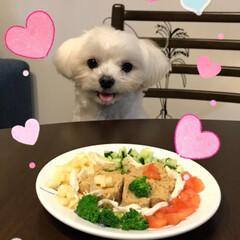 お誕生日/LIMIAペット同好会/フォロー大歓迎/ペット/ペット仲間募集/犬 そういちろう🐶💕 本日  2月9日 肉の…
