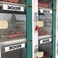 🍘/いちご好き/いちご自販機 コレが🍓いちごの自動販売機🍓🍓  隣の店…