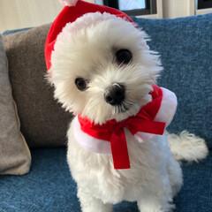 サンタクロース/わし/ペット/ペット仲間募集/犬/わんこ同好会/... メリークリスマス🎄🎁🎅 みなさん 素敵な…