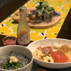 マリメッコ/マルチーズ/生しらす丼/今日の夕ごはん 今日の夕ごはん 生しらす丼 トマトおでん…