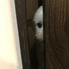 そういちろう/わし/ペット/ペット仲間募集/犬/わんこ同好会 そうちゃんは、見た‼️