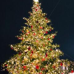 のぞみは停まらない/新幹線こだま/ライブ/東京お上りさん/今年はライブ三昧/クリスマス/... 本日のまとめ エビスガーデンプレイスのイ…
