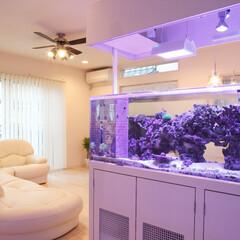 新築/不動産・住宅/滋賀県/水槽/海水魚/リビング 海水の水槽のあるお家です( *´艸`) …