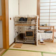 和室インテリア/猫部屋/ペットケージ/ハチワレ/黒猫/猫ハウス/... 多頭飼い始めました。成猫同士ですが相性良…(1枚目)
