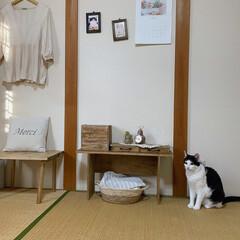 棚DIY/机DIY/アンティーク風/レトロ/2頭飼い/白黒猫/... 最近猫同士で遊ぶのに飽きたのか、ずっと私…(1枚目)