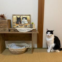 猫のいる暮らし/ペットグッズ/ペット似顔絵/ペット/似顔絵/イラスト/... オーダーしていた、うちのこ似顔絵届いた♡…(1枚目)
