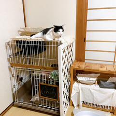 成猫を家族に/ペットと暮らす/セリアリメイク/百均すのこ/すのこDIY/ケージDIY/... セリアのすのこでケージの屋上作ってみた𓈒…(3枚目)