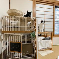 成猫を家族に/ペットと暮らす/セリアリメイク/百均すのこ/すのこDIY/ケージDIY/... セリアのすのこでケージの屋上作ってみた𓈒…(1枚目)