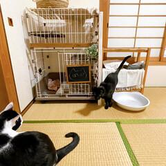 成猫を家族に/ペットと暮らす/セリアリメイク/百均すのこ/すのこDIY/ケージDIY/... セリアのすのこでケージの屋上作ってみた𓈒…(2枚目)