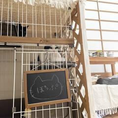 和室インテリア/猫部屋/ペットケージ/ハチワレ/黒猫/猫ハウス/... 多頭飼い始めました。成猫同士ですが相性良…(2枚目)