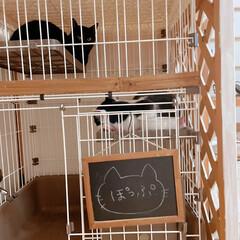和室インテリア/猫部屋/ペットケージ/ハチワレ/黒猫/猫ハウス/... 多頭飼い始めました。成猫同士ですが相性良…(3枚目)