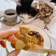 猫と暮らす/器のある暮らし/Madu/おしゃれカフェ/焼き菓子/東大阪/... 今日のおやつ。 東大阪「よつば印」さんの…(3枚目)