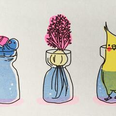 インコ/鳥/ポストカード/インテリア/かわいい/ゆるい/... ちょっとおしりを冷やしている左のマメルリ…