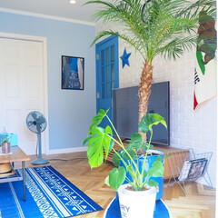 西海岸インテリア/ニトリ/西海岸/西海岸風/カリフォルニアスタイル/ブリックタイル/... 我が家の夏っぽいアイテムは観葉植物のフェ…