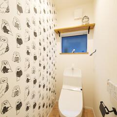クロス/壁紙 ふくろうの壁紙でトイレが楽しい空間に。