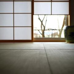 和室/雪見障子/障子/畳 庭を愉しむ家。 和室の雪見障子