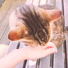 フォロー大歓迎/ペット/ペット仲間募集/猫/にゃんこ同好会/おでかけ/... 寒い朝ですね!☃️ 近所のねこちゃんがす…