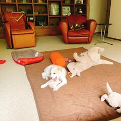 片付け/ぬいぐるみ/子供部屋/寝室/ぬいぐるみ収納 片付けても散らかされる終わりなき戦い😡