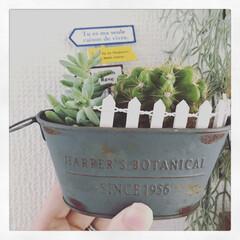 多肉植物/サボテン/グリーン/雑貨/100均/セリア/... ただのサボテンを 多肉植物と一緒に寄せ植…