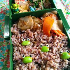 雑穀米/菊芋/キャラ弁/お弁当記録/旦那さん弁当/お弁当/... カエル好きな主人のお弁当😳