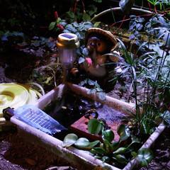 庭に池/ソーラーパネル/フィルター 小さい庭に小さい池を作って小さい魚を飼い…