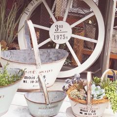 車輪/ガーデニング/ガーデン/バスケット/プランター/トロワメゾンウッドウィール/... 久しぶりに再入荷の白い木製車輪 トロワ …(1枚目)