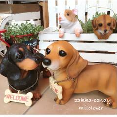 可愛い/ガーデン/置物/いぬ/犬/ダックスフント/... かわいいウェルカムダックス