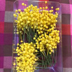 趣味の時間/お花のある暮らし/cray/ミモザ/お花の教室/春/... crayのミモザ 1015本出来ました😅…