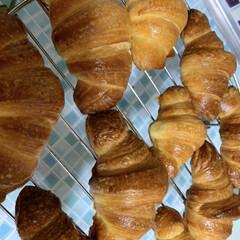 クロワッサン/手作り/パン 綺麗にクロワッサン🥐焼けましたー🤗試食は…