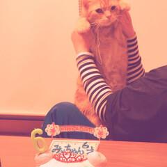 記念日/お誕生日/猫/アメショ/ねこ同好会 2020年1月20日 みぃちゃん6歳ハピ…(1枚目)
