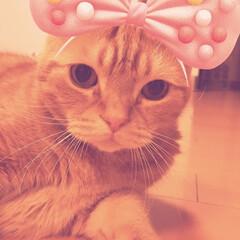 猫ねこ/アメショ/猫/猫の日 猫の日ฅ•ω•ฅニャニャーン✧ 世界中の…(1枚目)