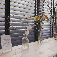 春のフォト投稿キャンペーン/暮らし/住まい/お花のある暮らし/暮らしを楽しむ/カフェ風インテリア/... 窓際に作ったカウンターテーブル♡  Ca…