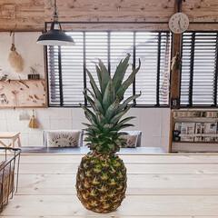 フルーツ/ウッドブラインド/子どもと暮らす/パイナップル/暮らしを楽しむ/日々の暮らし/... 頭つきのパイナップルを初めて買いました🍍…