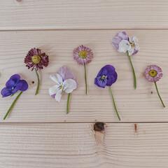 お花摘み/おうち時間/暮らし/お庭のお花/暮らしを楽しむ/日々の暮らし/... お庭で摘んだお花𖡼.𖤣𖥧  デイジーとビ…