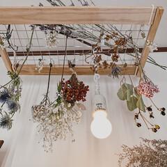 セリアリメイク/セリア/ドライフラワーのある暮らし/お花のある暮らし/ディスプレイ/ハンギング/... すのことワイヤーメッシュで作ったitem…