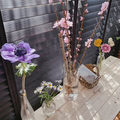 風景/インテリア/住まい/小さい春/お花のある暮らし/春/... ブランドから入るポカポカの光 𓂅𓂅☼˚…